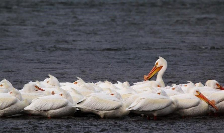 Community of Pelican Narrows